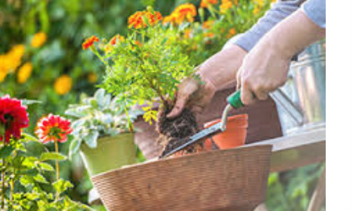 Garden maintenance services